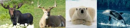 Exotic Canadian Wildlife