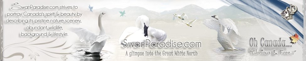 logo for swanparadise.com